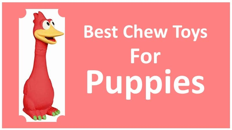 Best Chew Toys For Puppies That You Can Buy On Amazon