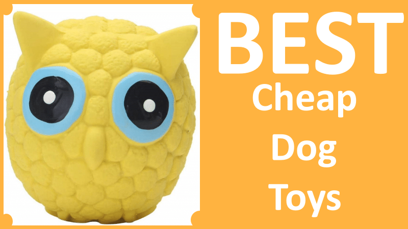Best Cheap Dog Toys That You Can Buy On Amazon